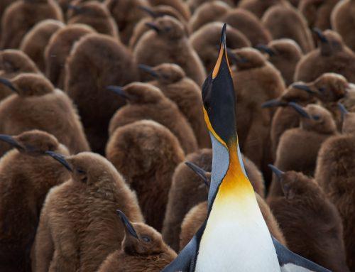 BIZTOPIA: Welcher Führungstyp sind Sie? Liegt Ihnen das Thema Führung?
