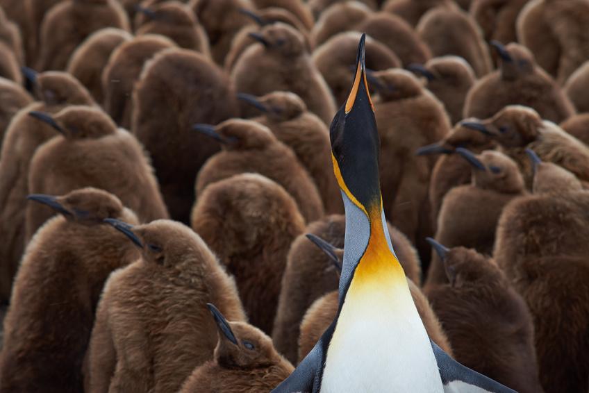 BIZTOPIA: Welcher Führungstyp sind Sie? Liegt Ihnen das Thema Führung? 2